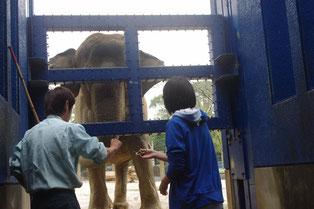 象に餌をやる体験もさせていただきました