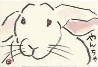 ウサギ「やんちゃ」