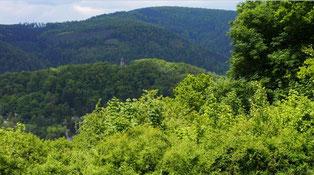 Ausblick von der Juval Alp