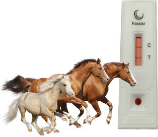 Fassisi TetaCheck for Horses