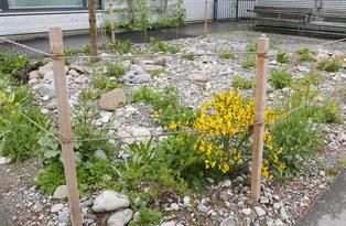 Ruderalflächen – eine ökologische Alternative zu den Steingärten. Hier können auch verschiedene Steine, Haufen oder Gebüsche integriert werden. © Manfred Steffen