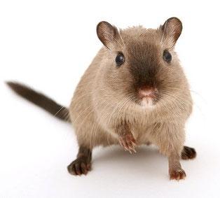 Photo d'un hamster