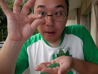 サラダほうれん草の種は緑色でコロコロしちょる