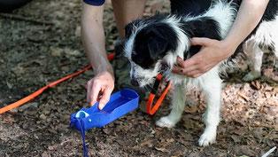 Nicht nur an heißen Tagen immer etwas zu trinken für den Hund dabei haben.