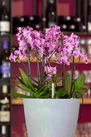 arrosage orchidée connecté avec OriCine® en situation dans un bar 1