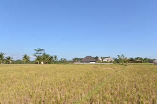 ビラ・マンディからの景観(写真)