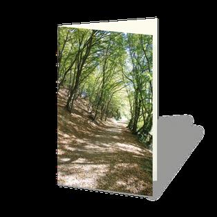 Trauerkarte mit sonnigem Weg durch den Wald. Licht- und Schattenspiel auf dem Waldboden.