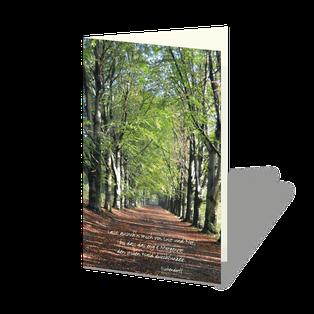 Trauerkarte mit Baumallee im Sonnenlicht. Das Herbstlaub auf dem Boden, die jungen Triebe an den Bäumen.
