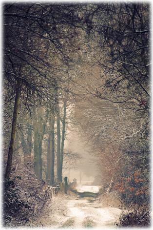 Wenn der Schnee den Weg in Stille säumt