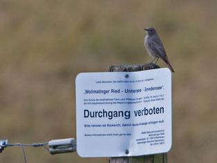 In Naturschutzgebieten meist ein Muss - aber auch sonst freuen sich Tiere und Pflanzen, wenn wir Menschen uns auf Wegen aufhalten - Foto: NABU Markgröningen