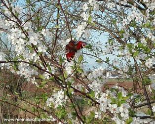 Frühlingsputz für meine Seele, Seele reinigen, Kraftquelle