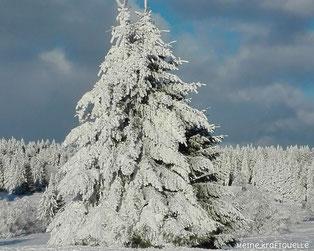 Schnee Hoherodskopf, Kraftquelle Schnee, Kraftquelle Winter