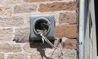 In einem alten Lautsprecher des ehemaligen Ortsrundfunks Flehingen haben sich Vögel in der Östlichen Bahnhofstraße ihr Nest gebaut. Wir sammeln weiterhin alte Fotos von allen Ortsteilen.