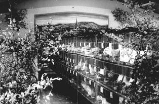 Im neuerbauten Züchterheim richtete der Kleintierzüchterverein Derdingen 1976 eine Kreisgeflügelschau aus.