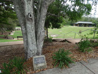 Clifton memorial tree in Eumundi