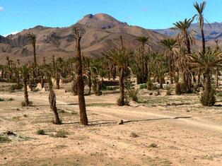 Maladie du palmier