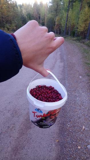Bittere Beeren, die zu mundender Marmelade verarbeitet werden