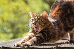 Vor-Ort Tierbetreuung, Katzenbetreuung. Erfahrene Katzensitter!