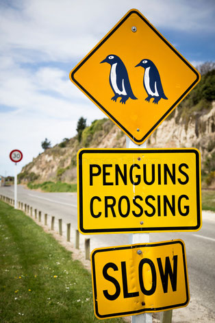 nuova zelanda - penguins crossing