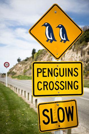 nuova zelanda - penguins crossing