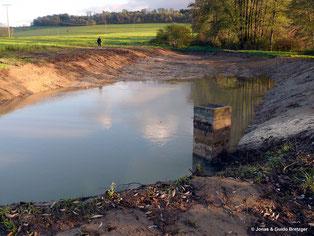 Entschlammt, neu gestaltet und angestaut ist der Amphibienteich bei Hohenroden, damit im Frühjahr zahlreich sich die Amphibien fortpflanzen können.