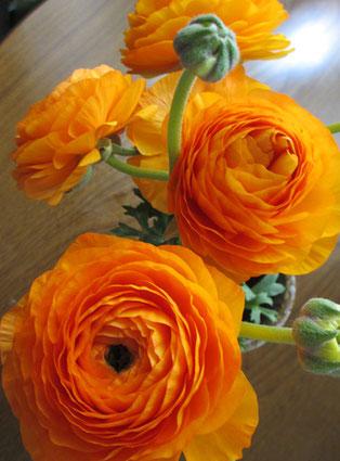 *春の花【ラナンキュラス】