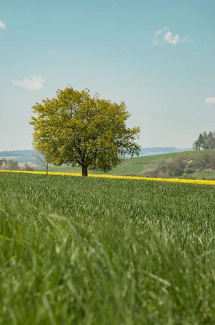 Sommeranfang in Hessen