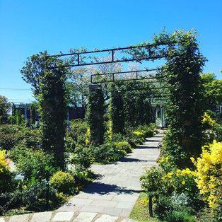 秘密の花園みたいなアーチ♪