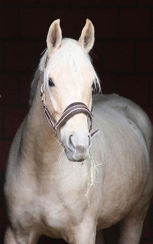 © www.horseandart.de