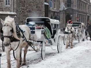 Une calèche pour découvrir le Vieux-Montréal