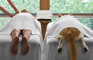 massage-canin-37