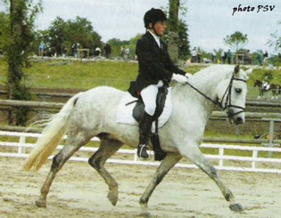 Emir de Kerglenn, champion de France GP dressage (2003).