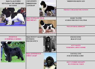 Pedigree des chiots