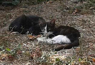 Garten im Traumferienhaus Bocca dell' Oro - zwei Kätzchen