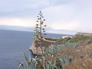 Blick auf die Klippen von Bonifacio