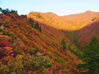 曇り予報が快晴となり、山に朝日があたって紅葉が映えます。