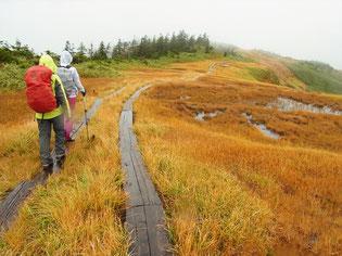 中門岳といっても平らな湿原です