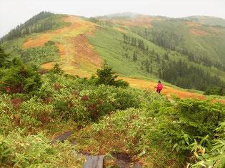 会津駒ケ岳の先、中門岳に小雨の中、向かいます