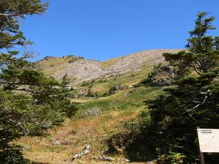 樹林帯を抜けると山頂部が見えてきました。