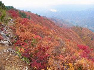 帰りも、登りとは違う表情を見せる紅葉にカメラが向く