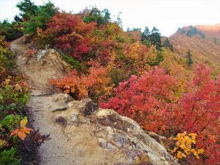 とにかく紅葉がすごい やせ尾根の紅葉はみごと