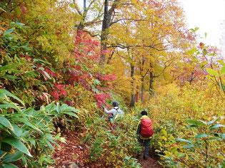 下山です。雨に濡れて紅葉も鮮やかです。登りは暗くて見えなかった。