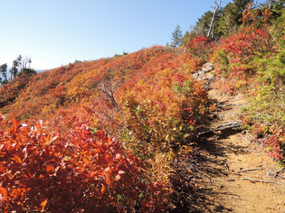 紅葉の稜線を歩いて、かなり歩いて