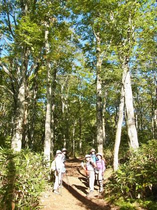 武尊牧場スキー場からのルートは見事なブナ原生林の中を歩く。