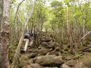 まずは地蔵岳へ、登山道の石だけが盛り上がっています。