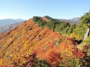 下台倉山からは、緩やかな稜線をいきます。緑の木々も原生林です