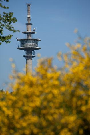"""Das Gelb des Ginsters (""""Eifelgold""""), das Blau des Himmels und das Grün der Bäume und Wiesen sind die Farben unseres Logos"""