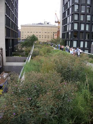 Der Highline Park in New York: ein wunderschöner Park, angelegt auf stillgelegten Bahngleisen.
