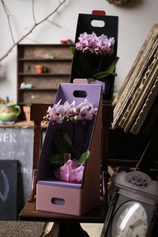 ミディー胡蝶蘭のギフトボックス ¥3500