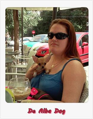 Foto perro de raza chihuahua hembra de pelo corto de color azul y fuego de los criadores de chihuahuas con afijo De Alba Dog de Valencia, Comunidad Valenciana, España, venta de chihuahuas, cachorros chihuahua de pelo corto y largo en venta con pedigree